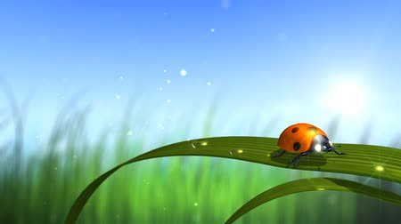 jardim : ladybird with sky and grass background