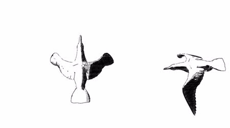sylwetka : collection of loop animated flying sketch sea bird in different position on isolate white Wideo