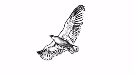 orel : loop animated flying sketch eagle on isolate white