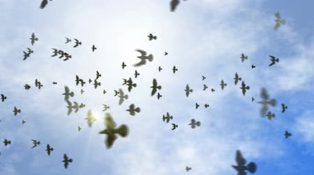 птица : animated flying flock of pigeons on the clear sky with sun flare