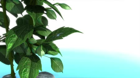 büyüyen : animated water drops on leaf concept background on white with place for text Stok Video