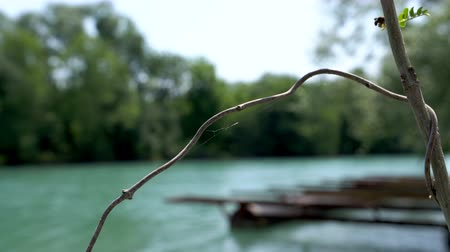 pontoon : A dried vine on the background of an old pier on pontoons at the riverbank.