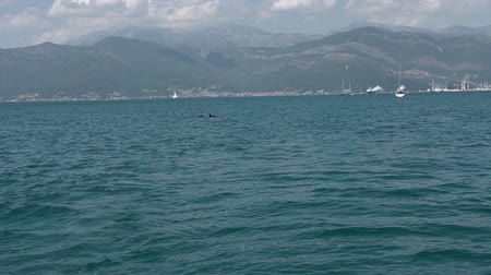 yüzgeçler : Slow motion mid-shot of two Dolphins jumping out of the water Stok Video