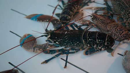 kerevit : Close-up View of Lobster in aquariums at the seafood market.
