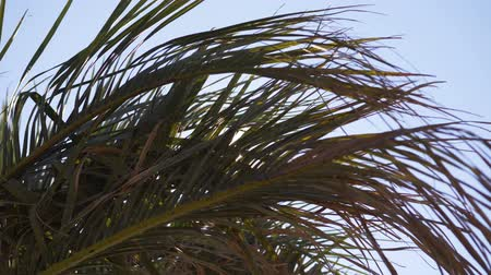 gale : Bright sunshine through the branches of palm trees, stormy wind