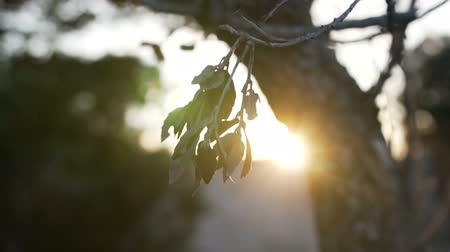 életmód : The rays of the sun make their way through the leaves of the trees