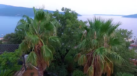 Tropical landscape with the sea and palm trees against a blue sky. Stockvideo