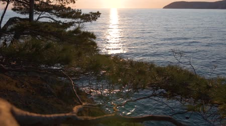Sea sunset through pine branches. 動画素材