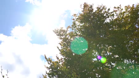 The suns rays make their way through the leaves of the tree. Lens flare effect. A sunny day Стоковые видеозаписи