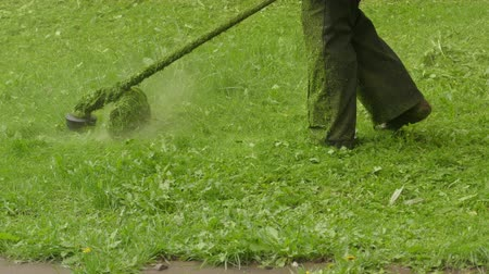 gramíneo : Gardener Is Cutting Grass With A Hand-Held Lawn Mower