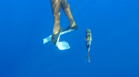 flippers : Diver Moves Flippers Underwater, Slow Motion, Close Up Stock Footage