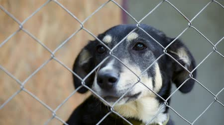 perdido : Sad dog in his cage at animal shelter waiting to be adopted. Lonely puppy in aviary.