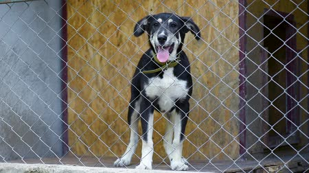 dog pound : Dog in his cage at animal shelter waiting to be adopted. Lonely puppy in aviary.