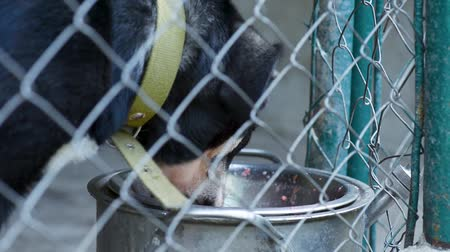 cimborák : Dog in his cage at animal shelter waiting to be adopted. Lonely puppy in aviary eating dog food from large bowl.