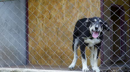 cimborák : Dog in his cage at animal shelter waiting to be adopted. Lonely puppy in aviary.
