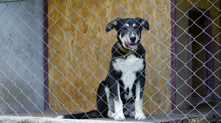 animal adoption : Dog in his cage at animal shelter waiting to be adopted. Lonely puppy in aviary.