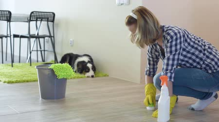 aussie : Young Woman Scolding her Dog Australian Shepherd. Female squatting on the floor while at home. Puppy Aussie with his Owner.