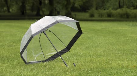 Transparent umbrella with raindrops is drying on a field of green grass at park in rainy day.