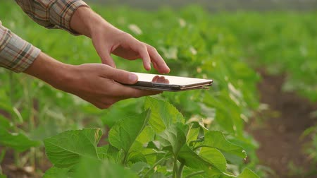agronomist : Farmer uses a tablet computer on a field Stock Footage