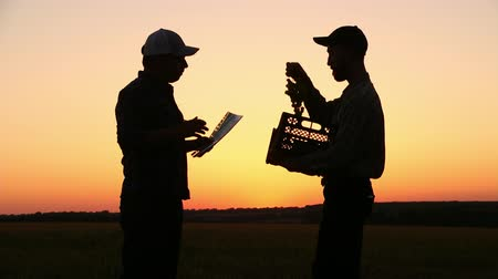 kopat : two farmers talking at sunset plants. Looking at grapes On the Sunset. Side view Dostupné videozáznamy