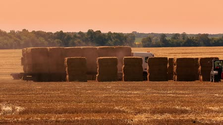 sklizené : Truck loaded with hay bales crossing a field. Manitoba, Canada.Big orange truck loaded with hay bales crossing a field at speed. Manitoba, Canada.