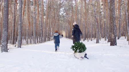 trenó : A woman carries a Christmas tree on a sled with her son .Christmas tree on a sled. Vídeos
