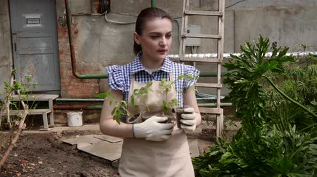 botanikus : Woman gardener is walking in greenhouse and choosing a place to plant the seedlings.