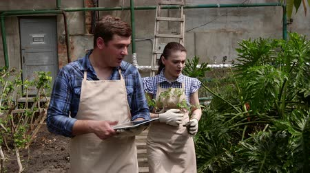 Agronomist man with tablet conducts inspection of growing plants in greenhouse with woman gardener.