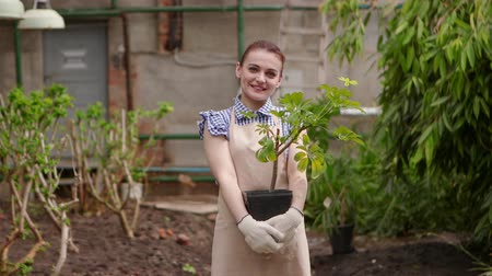 botanikus : Woman gardener in greenhouse is holding pot with plant in hands looking in camera and smiling.