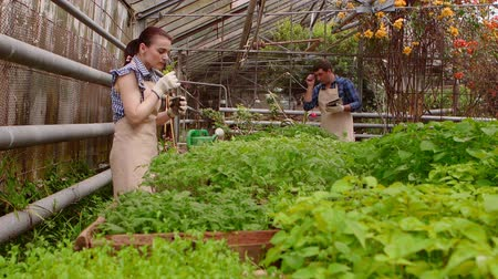 farmers : Workers in greenhouse, woman agronomist with tablet inspected seedlings, man gardener is watering plants. Stock Footage