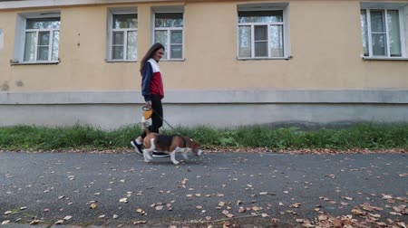 Woman with a charming dog walking in the autumn Park