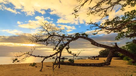 madagaskar : Beautiful Full HD timelapse of a sunset at the coast in Masoala, Madagascar Stok Video