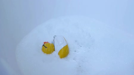 ducky : Rubber duck is taking a bath Stock Footage