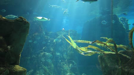 глубоко : marine aquarium and marine life