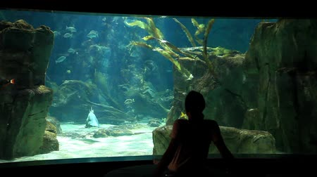 requins : homme regarder bel aquarium