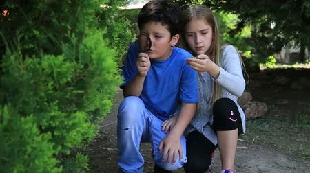 gözlem : Little girl and boy is playing on green meadow and examining tree leaves using magnifying glass Stok Video