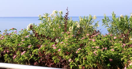 veranda : Scenic view of Mediterranean sea with tree and flowers Izmir Turkey