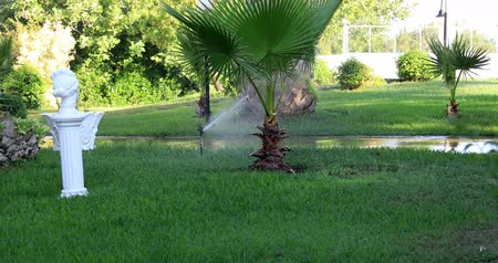 çimenli : Garden sprinkler during watering the green lawn on a sunny summer day