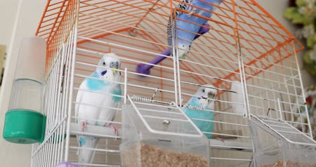 krutý : Beautiful budgies behind bars