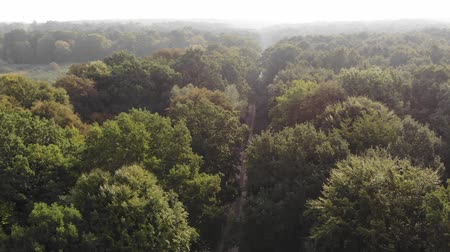 non kentsel : Way the midst of oak forest, light haze and sunshine. Fly forward technique, aerial view, 4k Stok Video