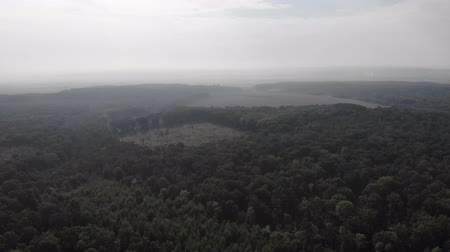 přímý : Aerial view of oak forest with cut areas, deforestation. Fly forward technique, 4k