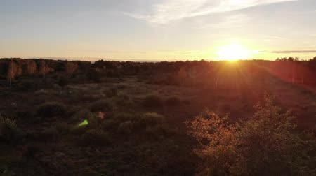 golden falls : Aerial view of autumn meadow, landscape, sunset and natural lens flare effect, smooth flight back technique Stock Footage