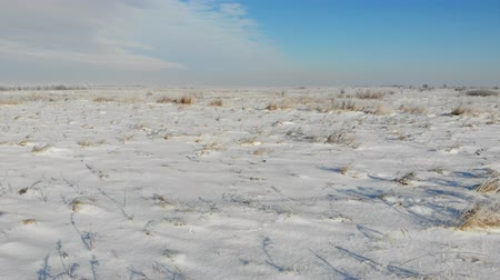 Snow-covered plain with dry grass. Nature in winter, countryside. Smooth fly forward over the land