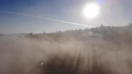 Mistige dageraad in de Karpaten. Over bossen en bergen Stockvideo