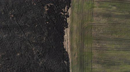 Aerial view of border of the burned and sown field. Top view with climb up technique