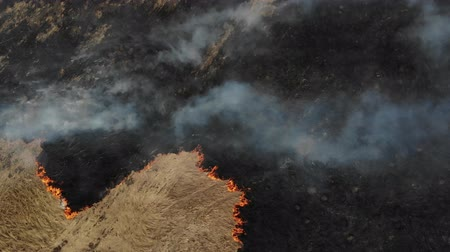 Dry grass and vegetation burns on the meadow, top view. Arson, Negative impact on nature 무비클립