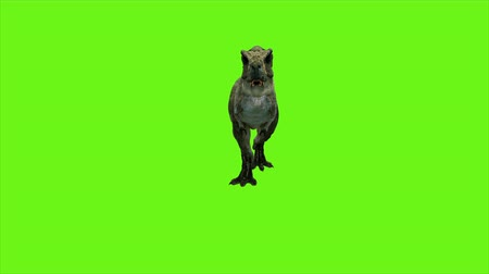 veszélyes : Tyrannosaur Dinosaur animation on green screen. GI realistic render. 4k. Stock mozgókép