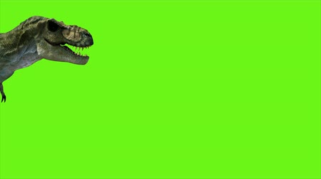 tirannosauro : T Rex Tyrannosaur Dinosaur animation on green screen. Realistico rendering GI. 4k.