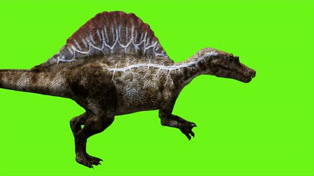 nagy : Dinosaur animation on green screen. GI realistic render. 4k.