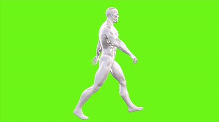sprintel : Animation of walking man on green screen. Loopable animation. 4k Stock mozgókép